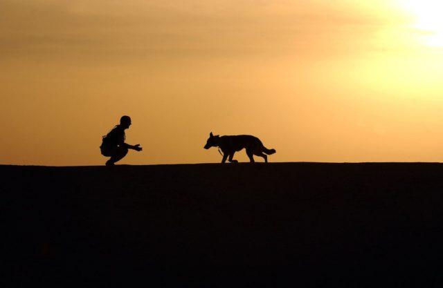Zoophilia: Stray Dog Bites Off British Tourist's Penis in Morocco